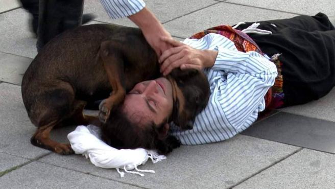 Perro callejero auxilia a actor herido